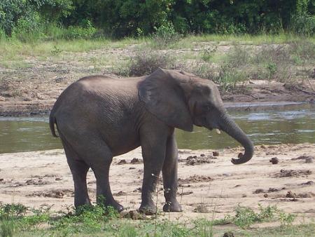 elefante.jpg