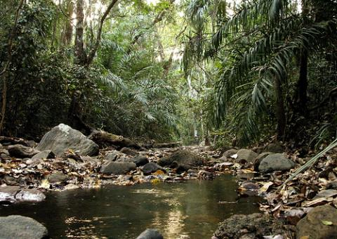 nigeria-natural.jpg