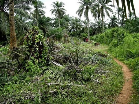 naturaleza-nigeria.jpg