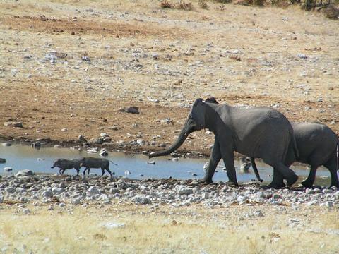 africa-elefante.jpg