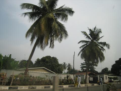 nigeria-palmera.jpg